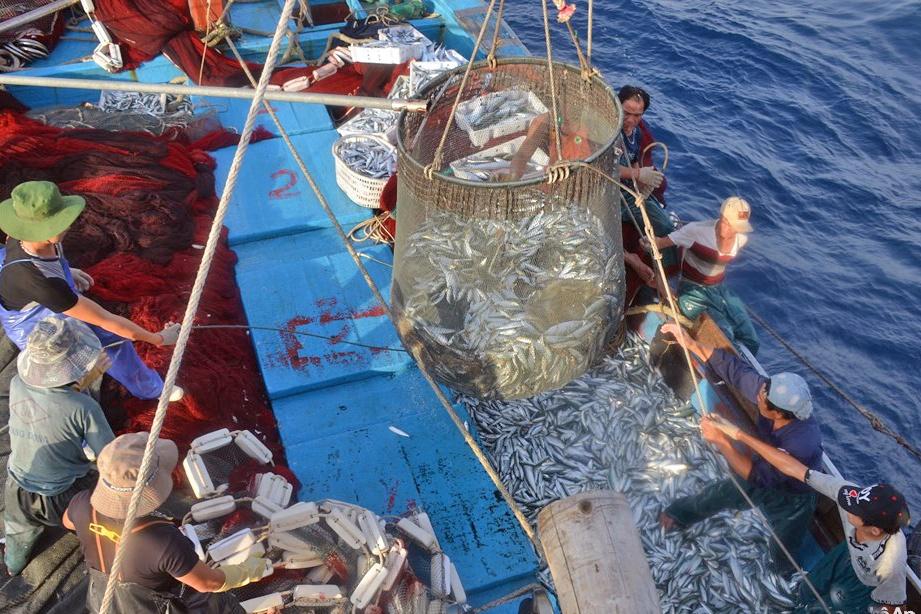 """""""Gỡ thẻ vàng"""" châu Âu, đưa hải sản vươn ra thế giới"""