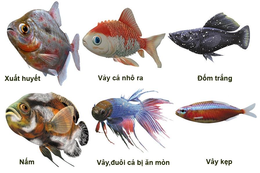 Dấu hiệu nhận biết sớm bệnh trên cá