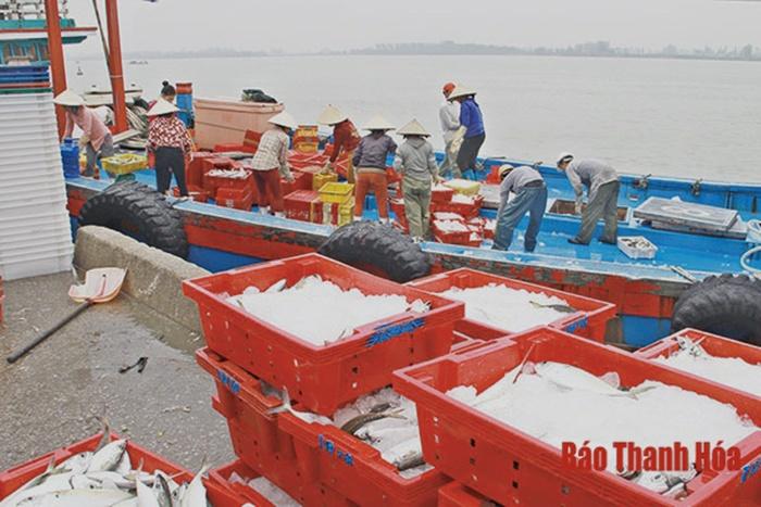 Ngư dân Thanh Hóa được mùa vụ cá Bắc