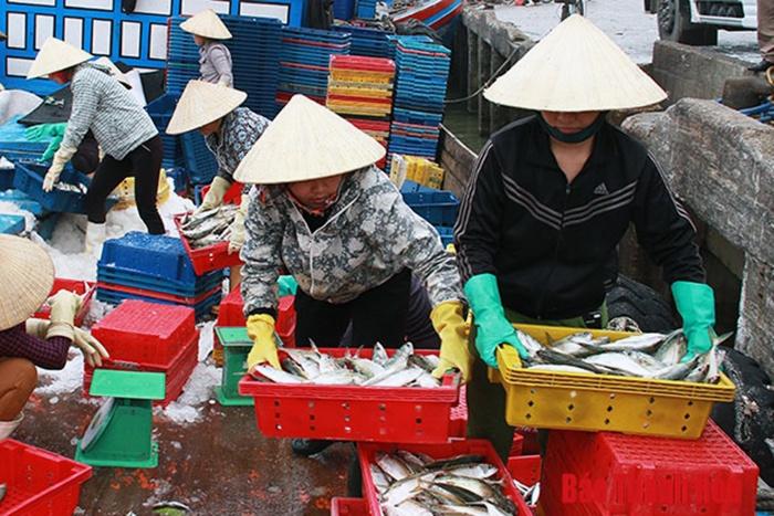 Thanh Hóa: Phấn đấu sản lượng thủy sản 2019 đạt 180.000 tấn