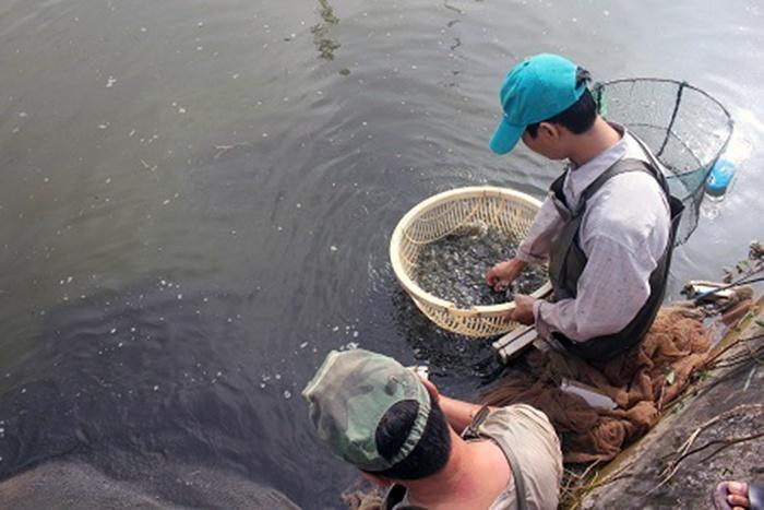 Thái Bình: Chuẩn bị cá giống cho mùa vụ nuôi thủy sản năm 2019