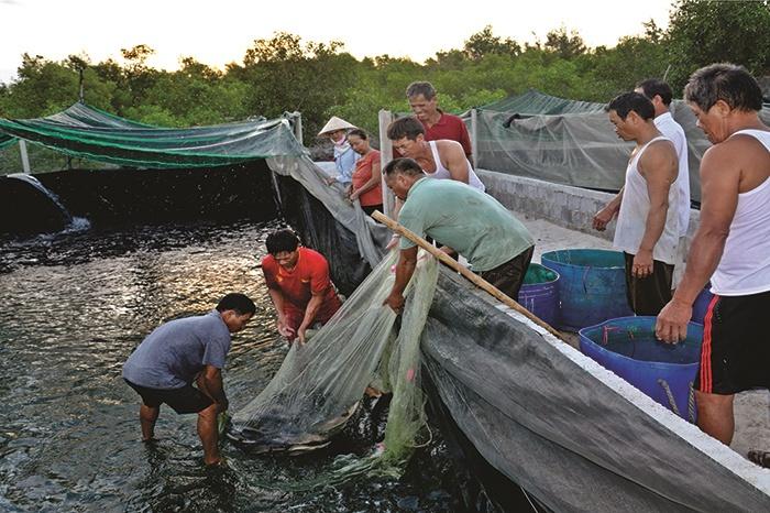 Người tiên phong nuôi cá lóc trong bể lót bạt
