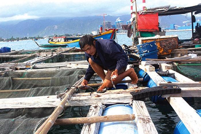 Nuôi thủy sản lồng bè: Chủ động phòng chống dịch bệnh và thiên tai