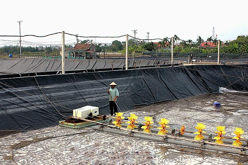 Nam Định: Chú trọng chính sách phát triển thủy sản