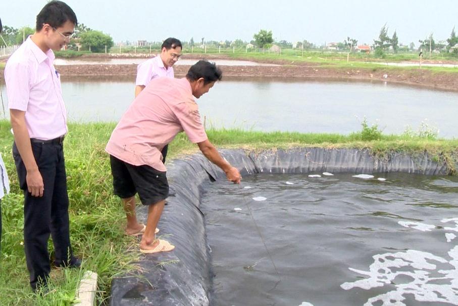 Kim Sơn: Tập trung phát triển sản xuất nông nghiệp