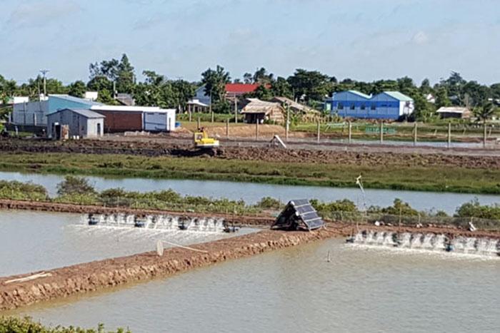 Tình hình tôm nuôi Cầu Ngang - Trà Vinh năm 2018