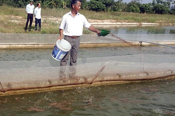 """Hà Nam phát triển nuôi cá theo công nghệ """"sông trong ao"""""""