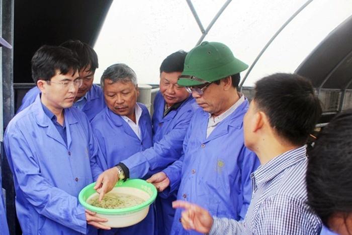 Mỗi năm Quảng Trị cần gần 2,2 tỷ tôm giống