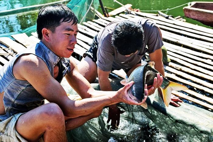 Nghệ An thiếu hụt nguồn giống cá đặc sản