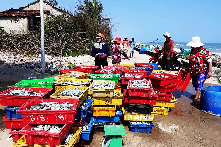 Ra quân đánh bắt đầu năm: Ngư dân Tam Thanh bội thu cá trích