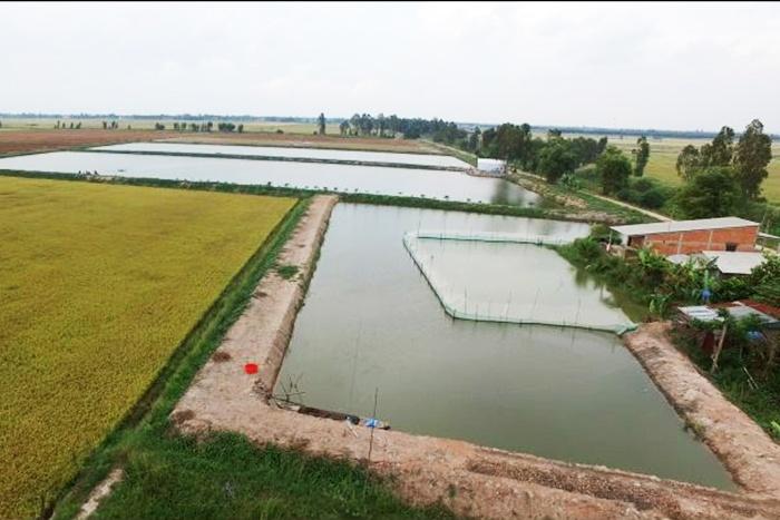 Long An nhiều diện tích đất lúa chuyển sang nuôi trồng thủy sản