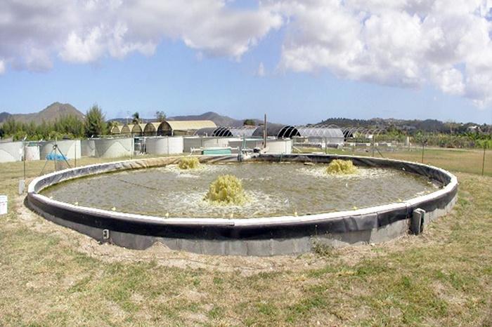 Một ví dụ về hệ thống nuôi biofloc hoàn chỉnh quy mô nhỏ
