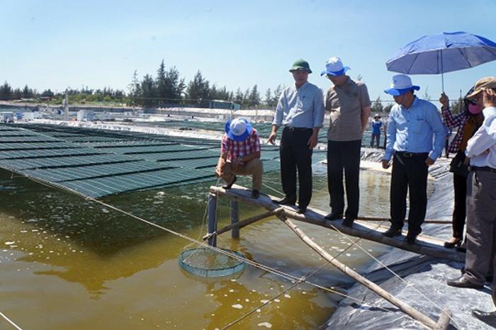Trang trại nuôi tôm thẻ chân trắng 40 tỷ đồng ở Quảng Nam