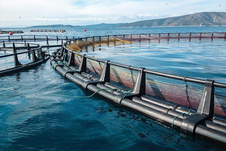 Trung Quốc thử nghiệm các trang trại gió - cá ngoài khơi