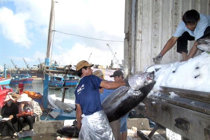 Chuyến biển xuyên tết, ngư dân Bình Định trúng đậm cá ngư