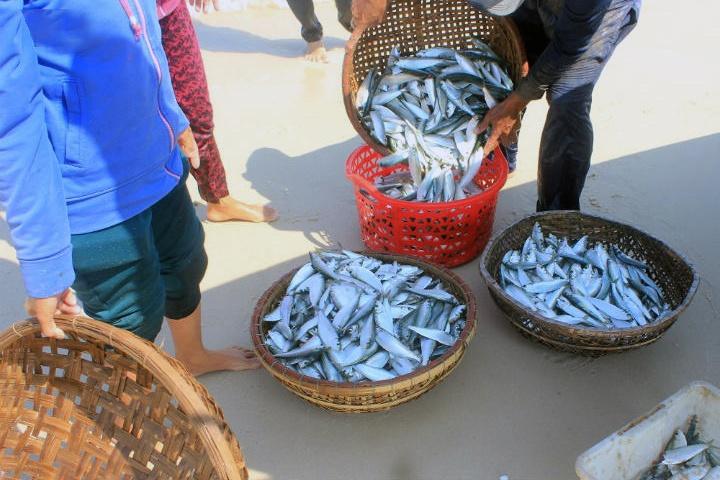 Niềm vui đầu năm của ngư dân miền biển
