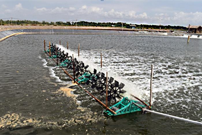 Khuyến cáo nuôi trồng thủy sản khi thời tiết diễn biến phức tạp