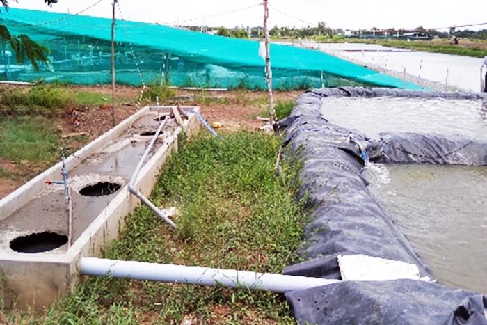 Mô hình xử lý nước thải nuôi tôm bằng bể biogas ở Trà Vinh