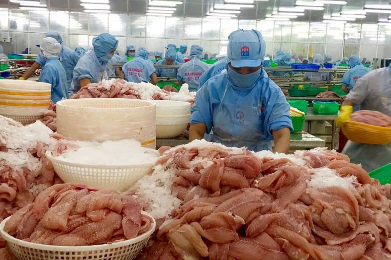 Vì sao giá cá tra lao dốc mạnh?