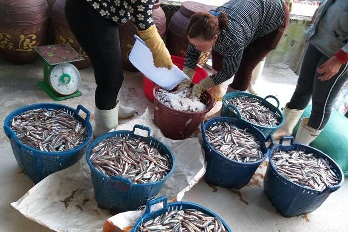 Quảng Ngãi: Vào mùa chế biến nước mắm