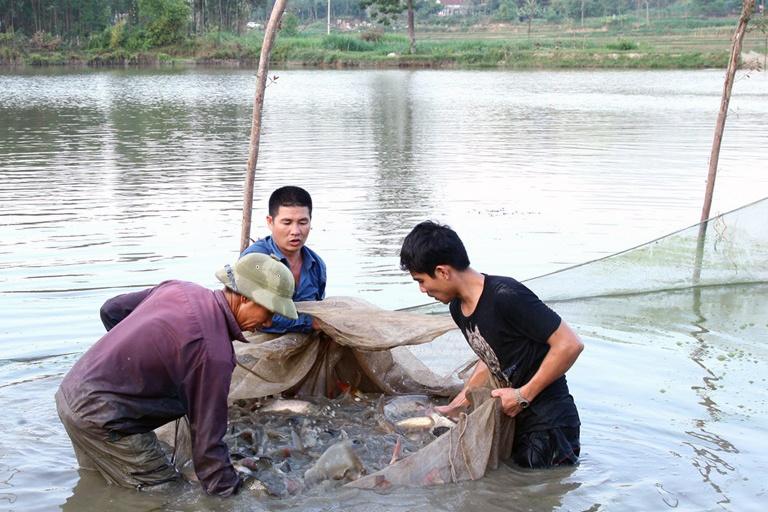 Nuôi trồng thủy sản giá trị kinh tế cao