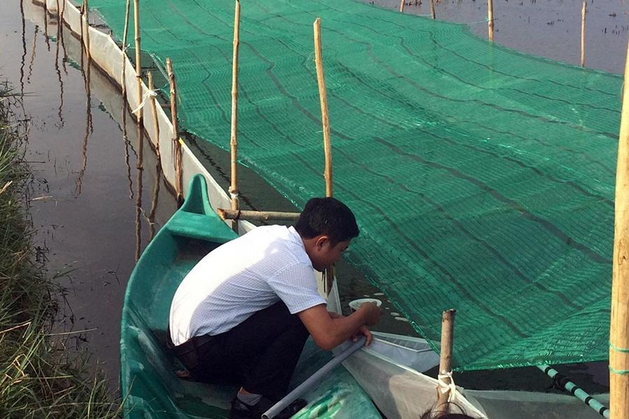 Khánh Hòa có 24 cơ sở sản xuất tôm sú giống