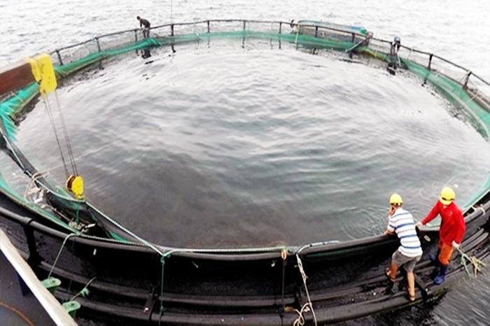 Hướng phát triển mới của ngành thủy sản Quảng Ninh