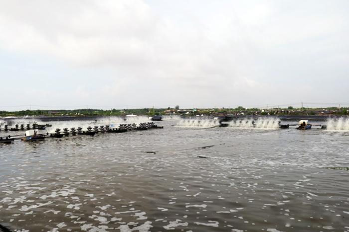 Giải pháp để xuất khẩu tôm nước lợ đạt kế hoạch