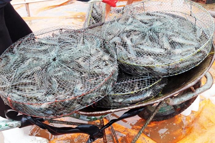 Cơ hội tốt để đẩy mạnh xuất khẩu tôm sang Trung Quốc