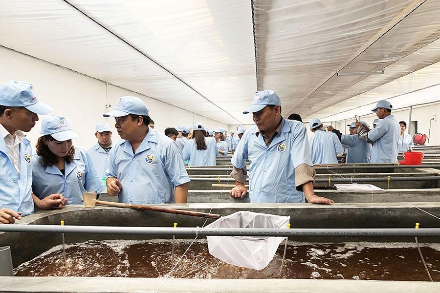 Việt Úc tại Quảng Ninh ra mẻ tôm giống đầu tiên