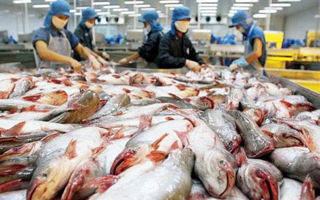 Chế biến cá tra