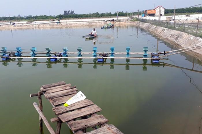 Quỳnh Lưu tích cực phòng chống bệnh ở tôm