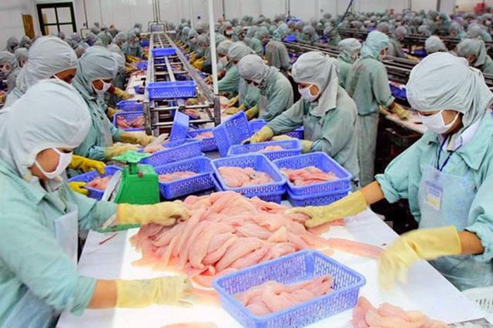 Xuất khẩu cá tra sang Trung Quốc và Mỹ bất ngờ giảm