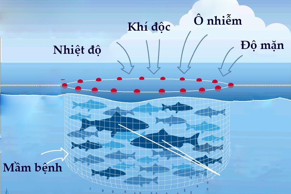 Tại sao biến đổi khí hậu gia tăng dịch bệnh trong nuôi trồng thủy sản biển?