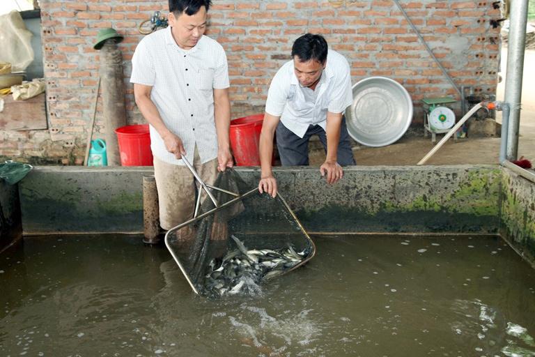 Nhóm liên kết nuôi trồng thủy sản, ổn định sản xuất