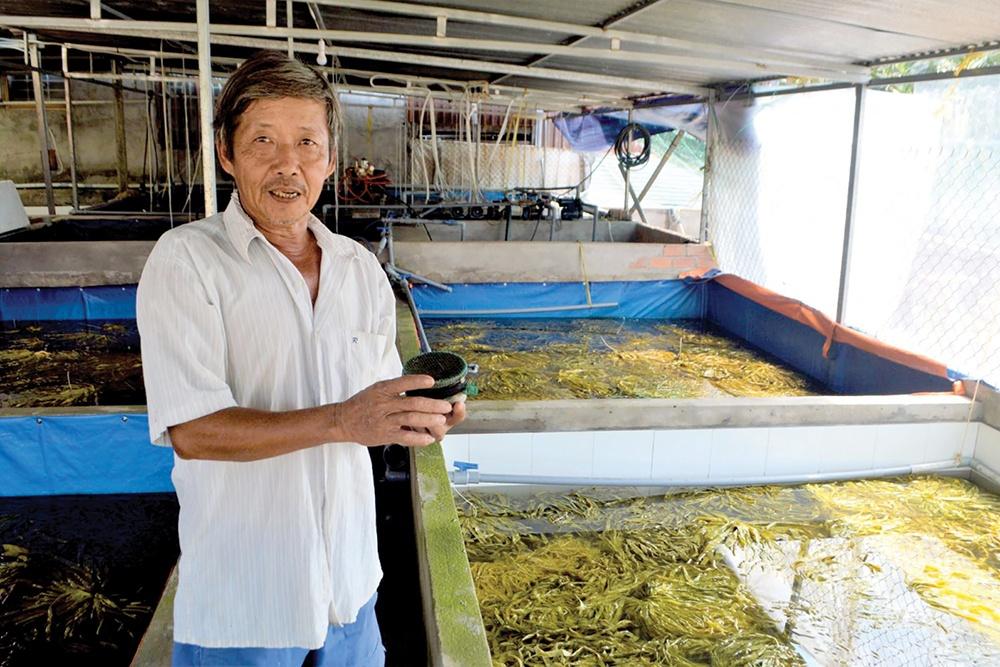 Thức ăn phù hợp cho lươn đồng ương nuôi đến 40 ngày tuổi