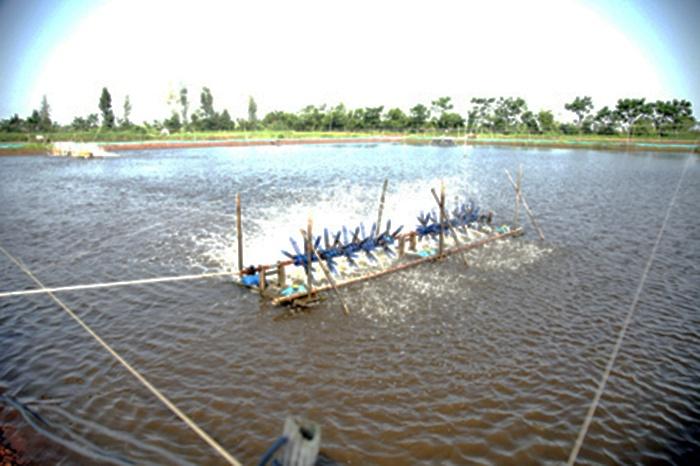 Chủ động quản lý ao nuôi tôm trong thời điểm giao mùa