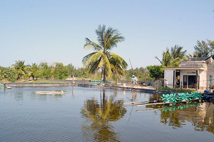 Cơ cấu lại diện tích nuôi tôm Quảng Nam