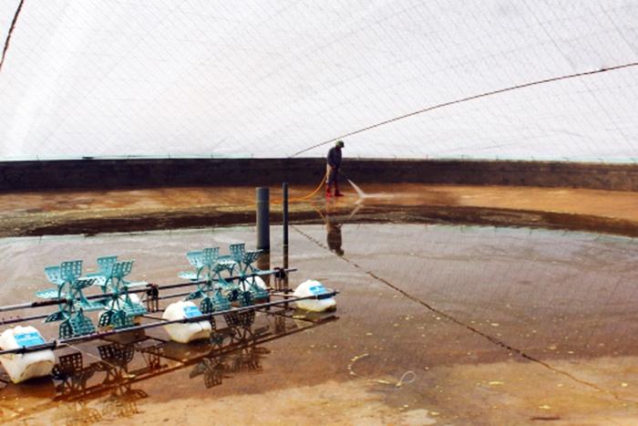 Thái Thụy: Cải tạo ao đầm nuôi trồng thủy sản