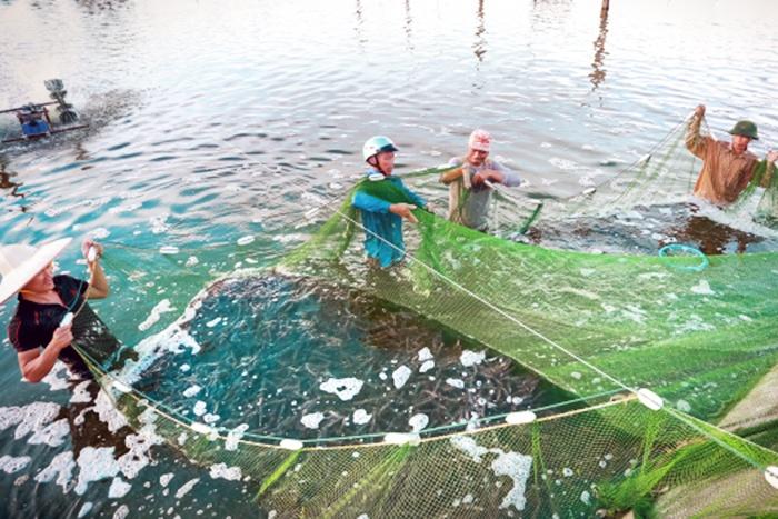 Nuôi tôm nước lợ Thái Bình: Những cách làm hay