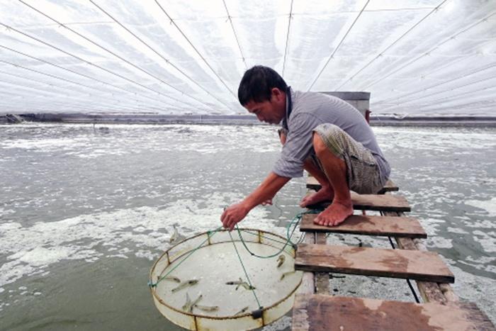 Mỹ công bố thuế chống bán phá giá tôm Việt Nam còn 0%