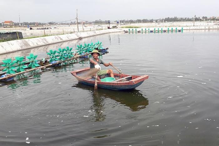 Nông dân Nghệ An sử dụng thảo dược phòng bệnh cho tôm