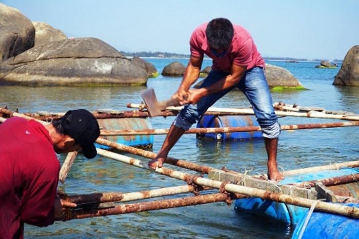 Hàng trăm bè nuôi cá ở vùng biển Dung Quất bị tháo dỡ