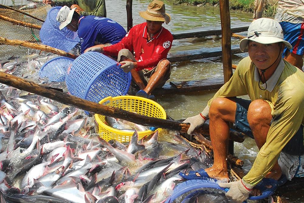 Định hướng cho thị trường cá tra