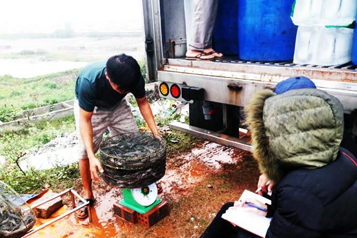 Tình hình nuôi và giá tôm, cá tra trong 3 tháng đầu năm