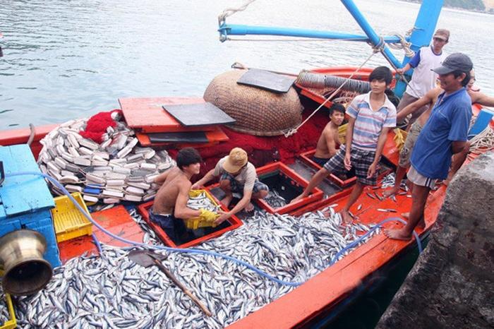 Bình Định: Xây dựng cụm công nghiệp chế biến thủy sản