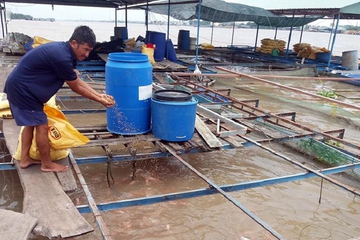 Tiền Giang: Lỗ nặng vì giá cá diêu hồng sụt giảm