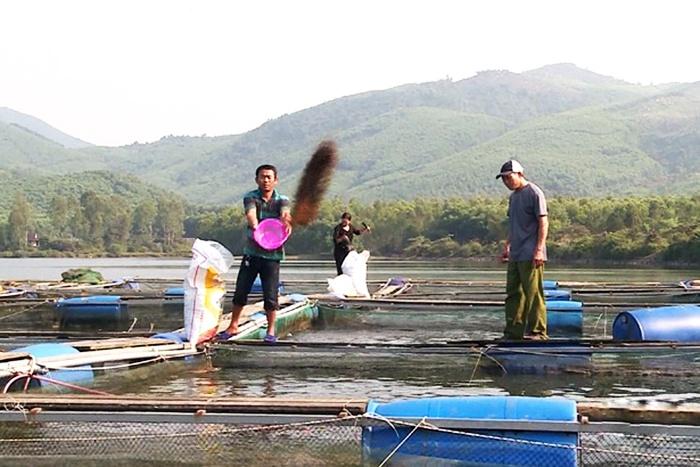 Thu tiền tỷ từ nuôi cá lồng bè trên hồ thủy lợi