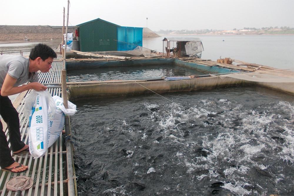 Hà Nội siết chặt quản lý nuôi trồng thủy sản lồng, bè trên sông