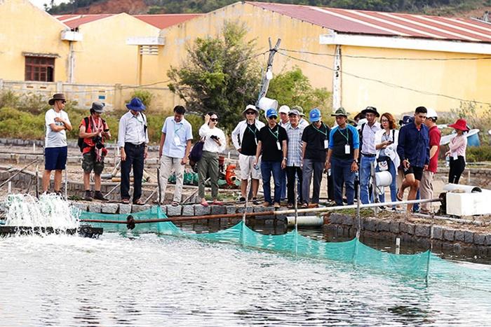 mô hình nuôi hải sâm tại Vạn Ninh